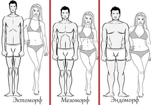 Виды телосложения у женщин: астеническое, нормостеническое, гиперстеническое, эндоморфный. имт, как определить индекс веса