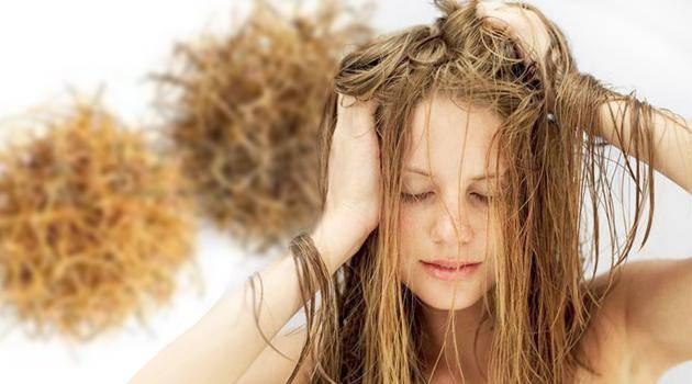 Очень сухие волосы — что делать и как их восстановить в домашних условиях