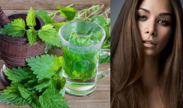 Крапива для укрепления и роста волос, рецепты заваривания и полоскания | здорова и красива