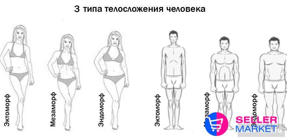 Что такое нормостеническое телосложение