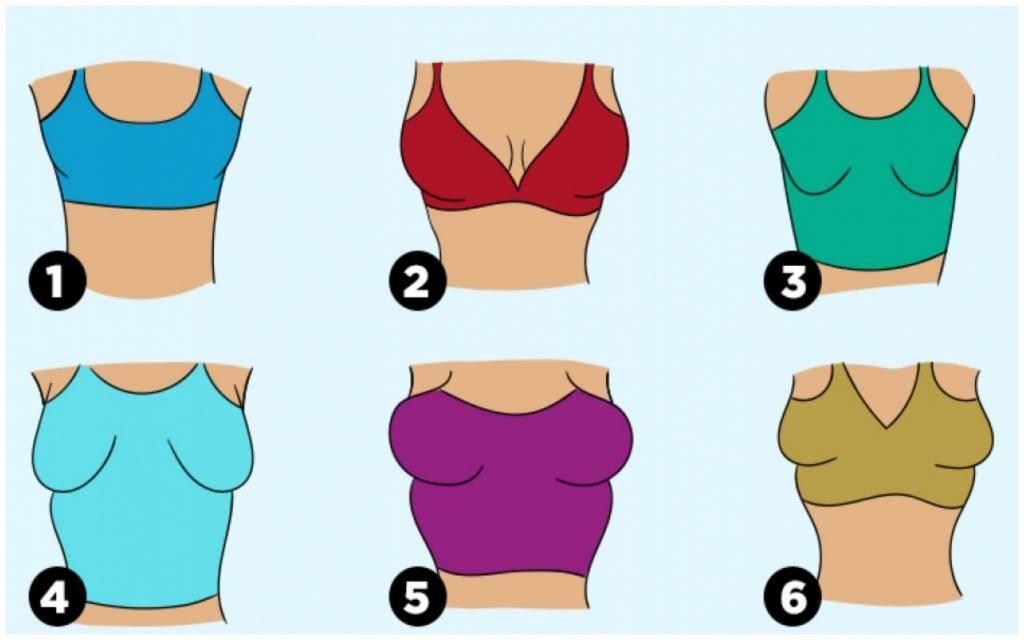 Женские соски по видам: цвета, формы, ареолы