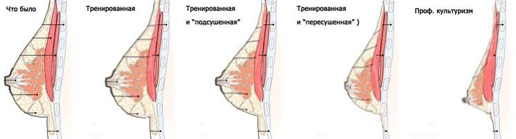 Как похудеть в груди: упражнения и диета для уменьшения грудной клетки - allslim.ru