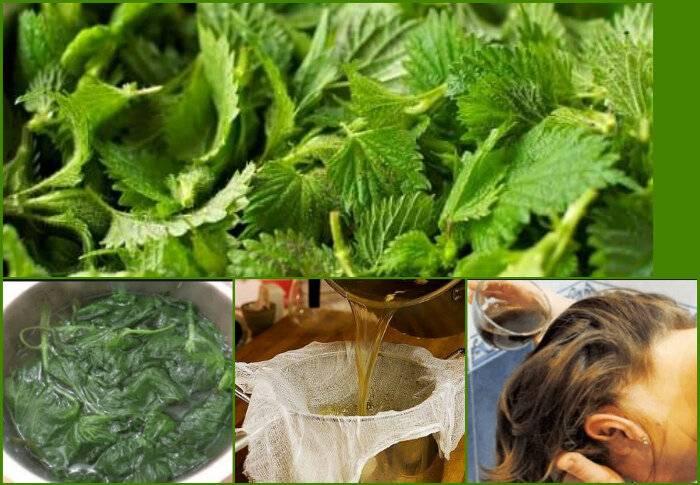 Лучшие травы для роста волос, от сечения, выпадения и перхоти | волосок