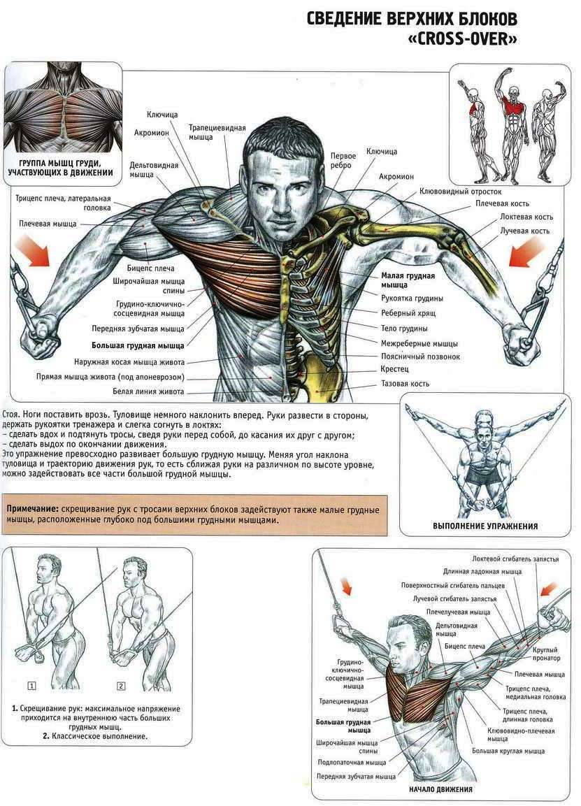 Какими упражнениями какие мышцы качаются у женщин