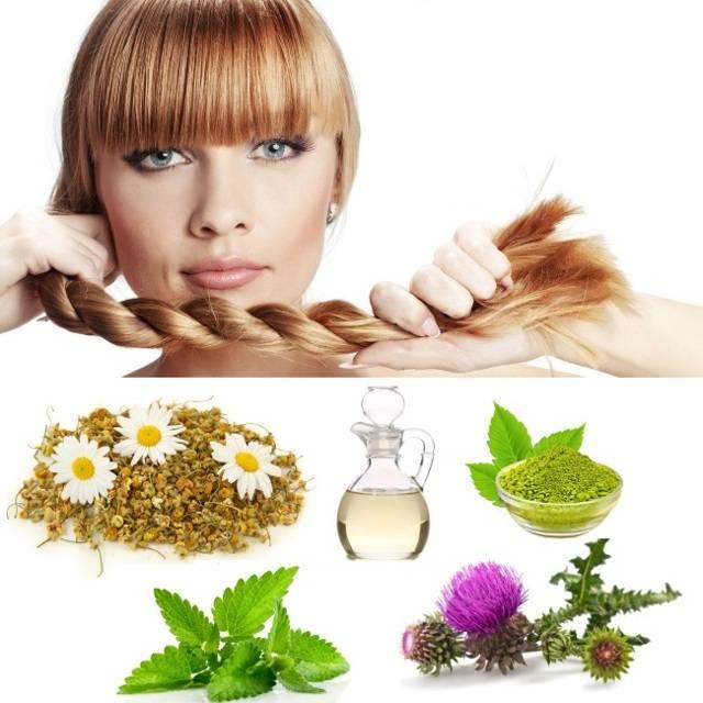 Крапива для волос: рецепт отвара и полезные свойства