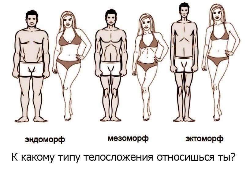 Диета для поддержания веса - расчет калорий. сбалансированное питание для поддержания веса - tony.ru